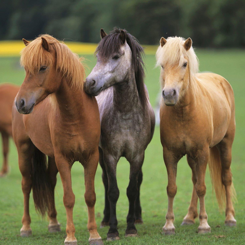три лошадки картинки каждого гостя показать